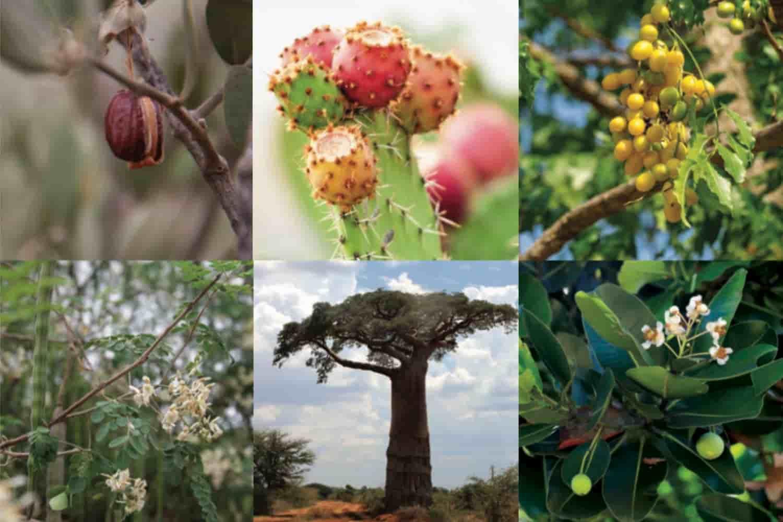 Les arbres végétales Comptoir des Huiles