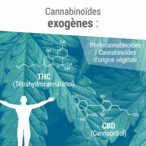 Des cannabinoïdes exogènes produits par les plantes