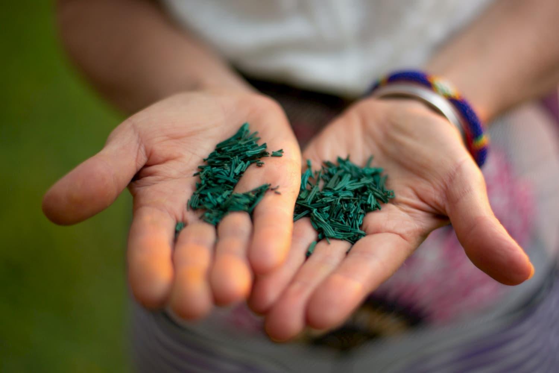 Quelle forme de Spiruline consommer ? paillette, poudre, comprimé, gelule ...